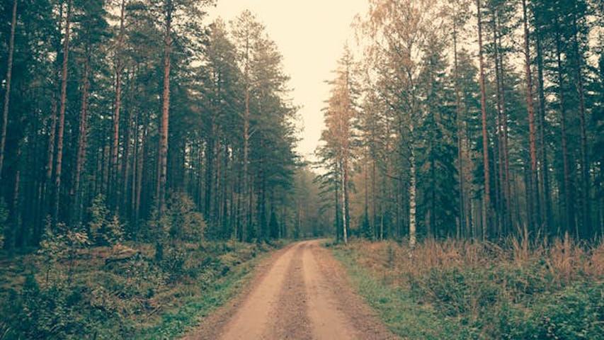 En skogsväg i Sverige